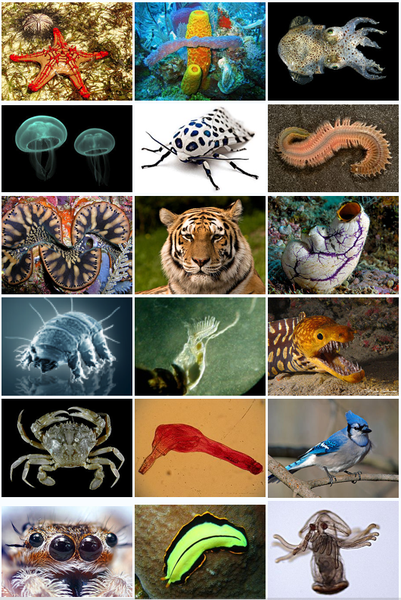 animal diversity Discover animal (kingdom: animalia) information, pictures, videos, maps and literature from curated sources on the encyclopedia of life (eol.