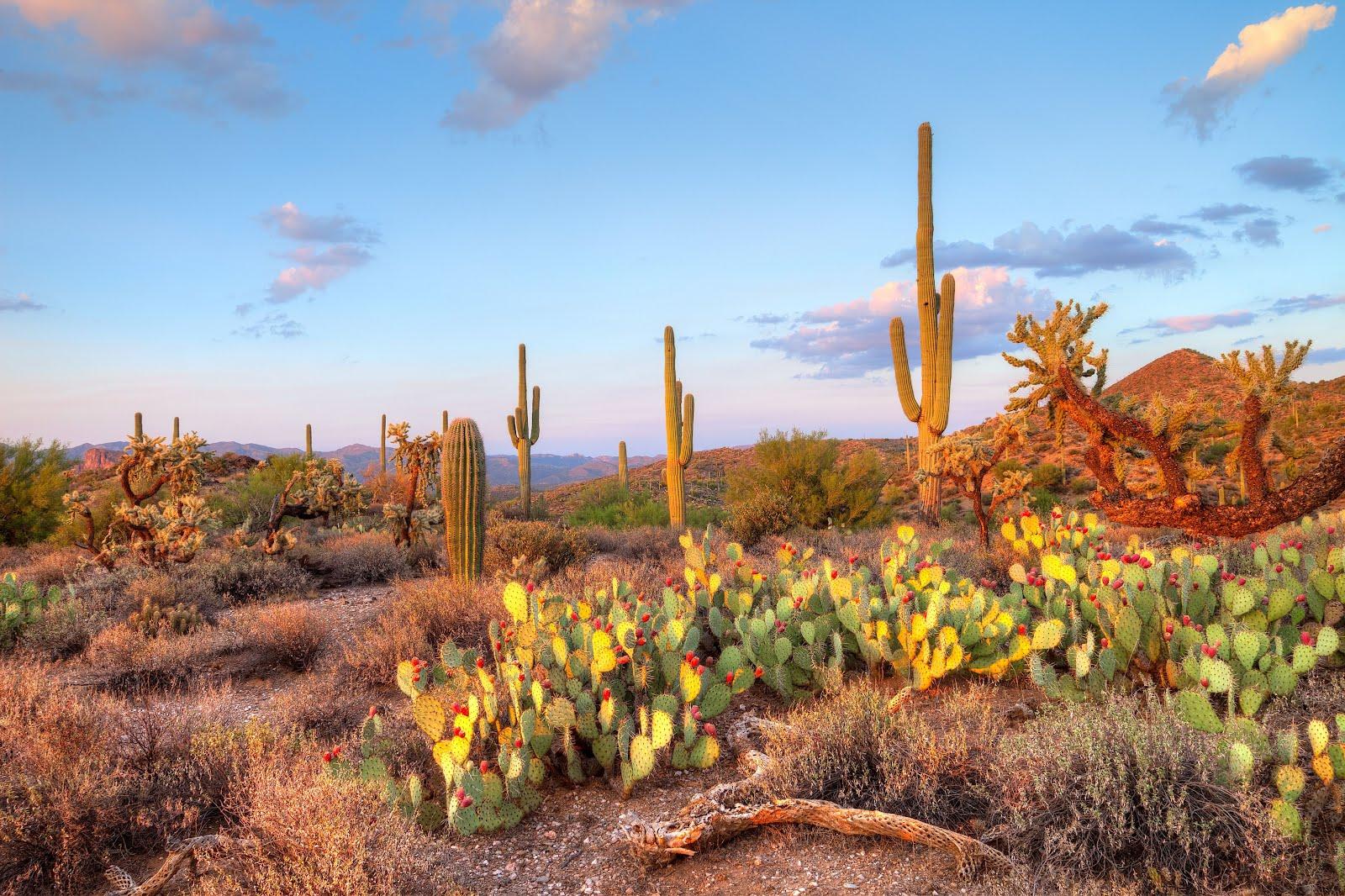 http://2.bp.blogspot.com/-KtsQ-vAe0Hk/T80dAqGUEzI/AAAAAAAA6do/l0RyAzyHzbU/s1600/paisaje-desierto-de-sonora-mexico-cactus-nopales.jpg