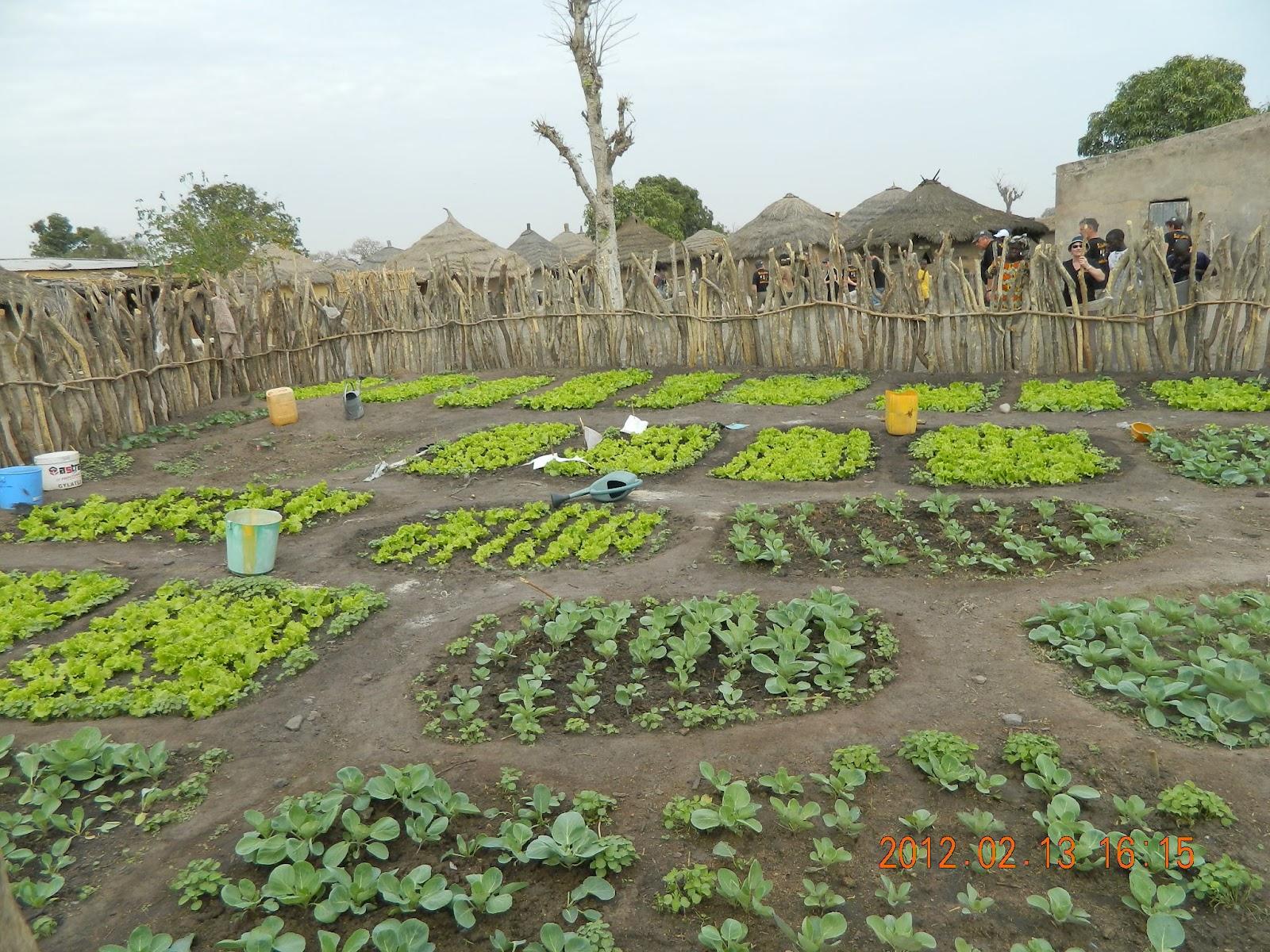 Bretagne mali via carhaix dakar 2012 des jardins for Le jardin dakar