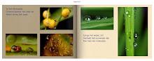 Nu ook te koop:  Fotoboeken met haiku.