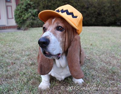 Basset modeling Peanuts trucker's hat