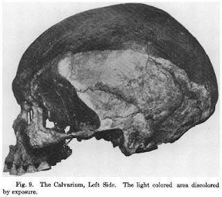 punin skull