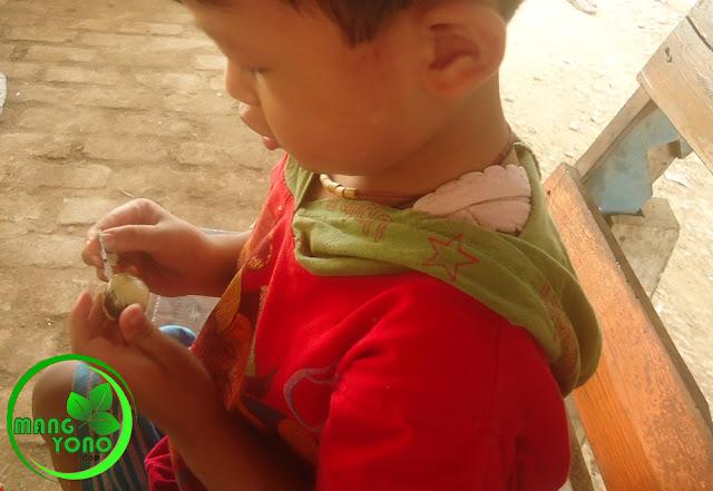 "FOTO : Anak saya ""Gigin"" sedang mengupas cangkang telur puyuh."