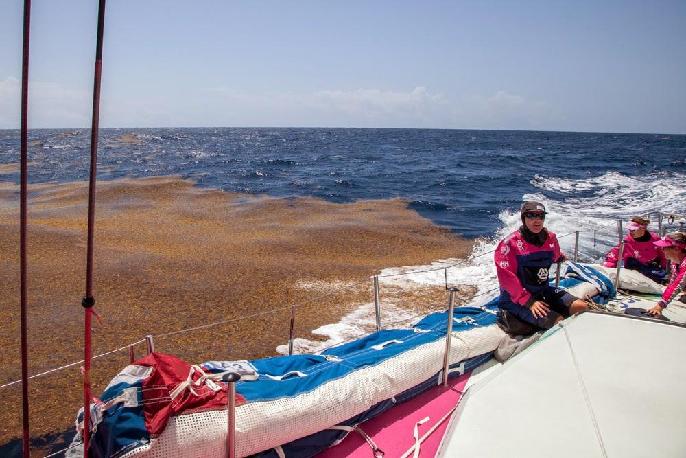 Les algues sur la Volvo Ocean Race !