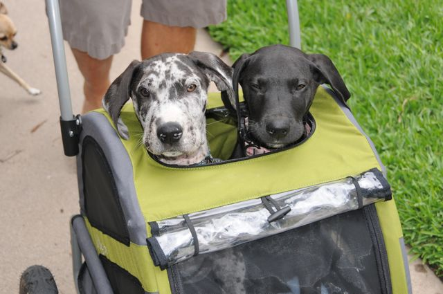 Small Dog Pushchair