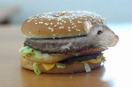 Introducing The Ratburger, The Newest 'Affordable Cuisine' From China!