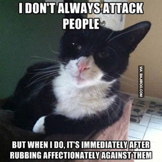 funny cat memes attack people meme
