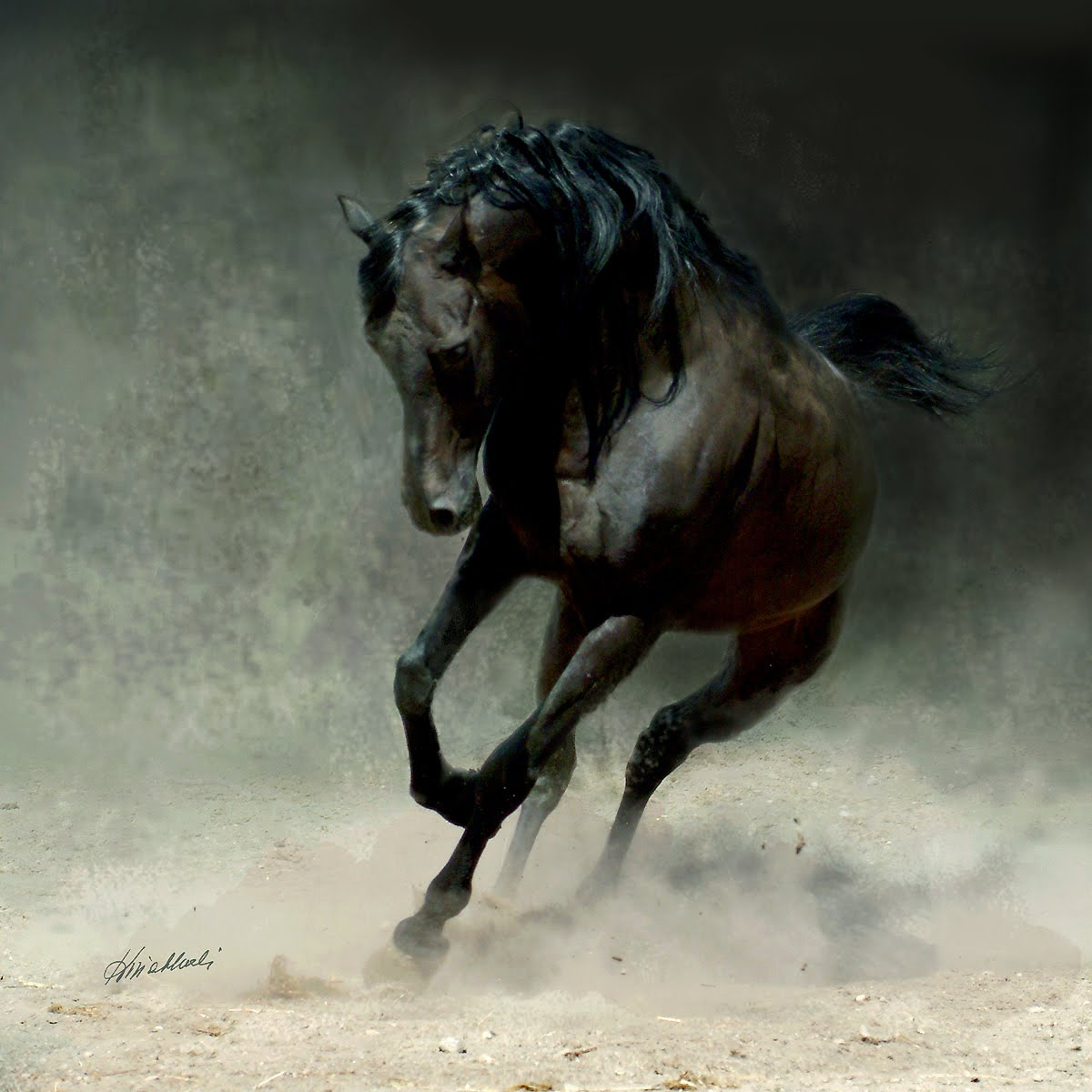 Amazing Dark Horse Running   Okay Wallpaper