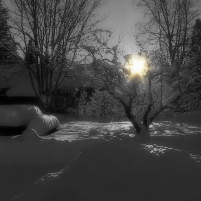 Vinter bild