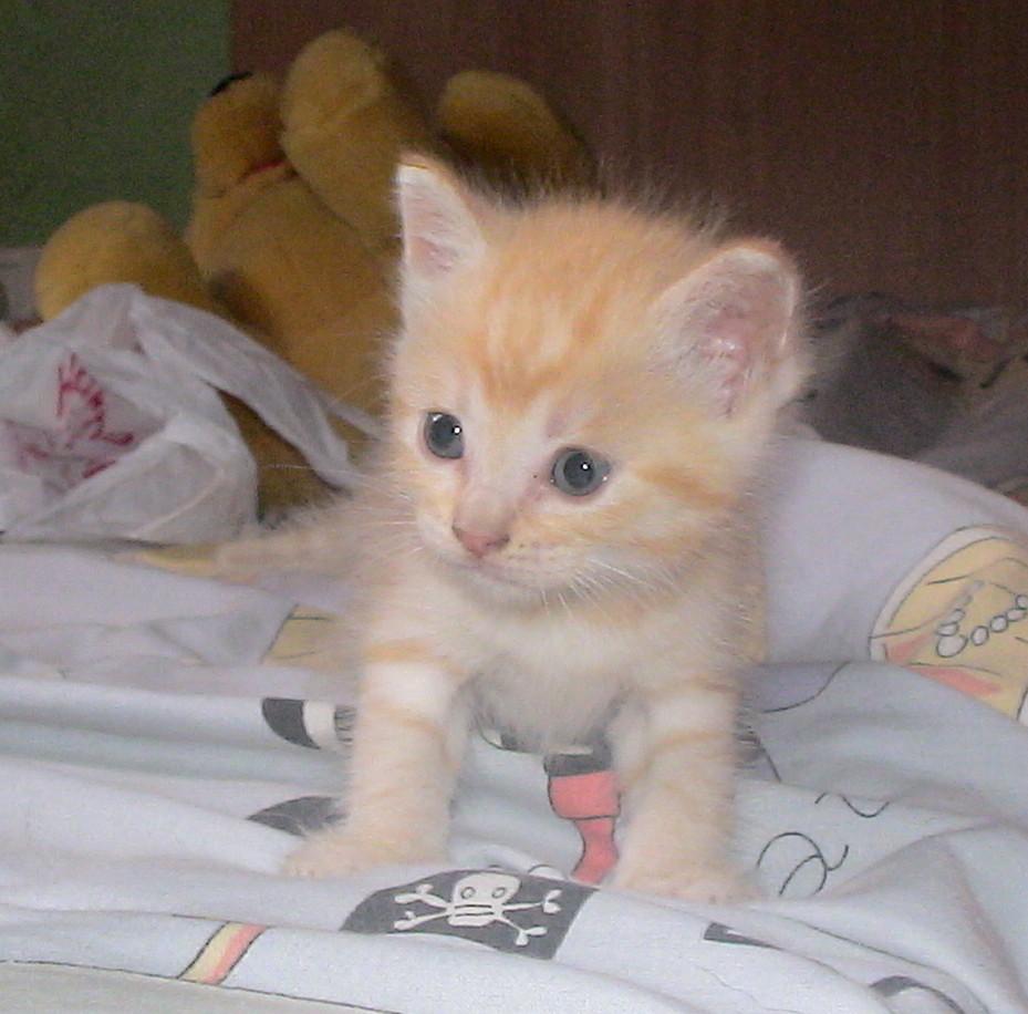El gato malva el blog de los gatitos de la calle mayo 2011 - Gatitos de un mes ...