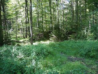 Grabhügel im Hügelgräberfeld beim stillgelegten Bahnhof Mühltal