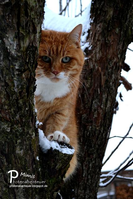 Katze Mimi versteckt sich auf einem Baum vor dem Nikolaus