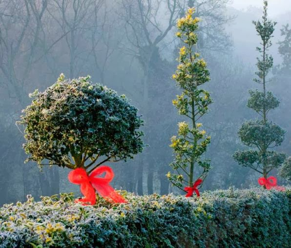 Holly decorations, ideas, Christmas decorating ideas, dressing a hedge