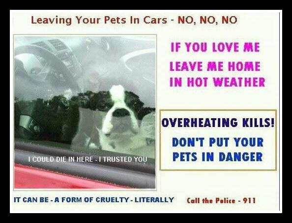 dog locked in car with no windows open