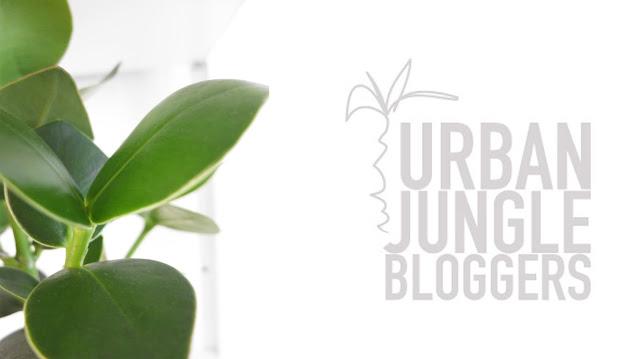 http://www.urbanjunglebloggers.com/november-2015-plantshelfie/