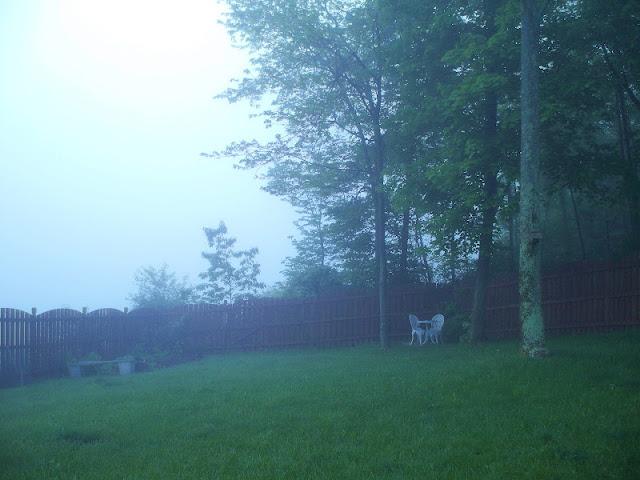 My backyard with fog
