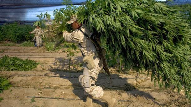 Maconha legal pode tirar bilhões de dólares dos traficantes