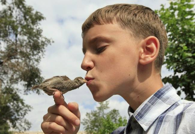 A 12-year-old boy has struck up an unusual friendship with a wild bird — Vadim Veligurov and Abi the sparrow have been inseparable since he nursed the baby bird back to health.