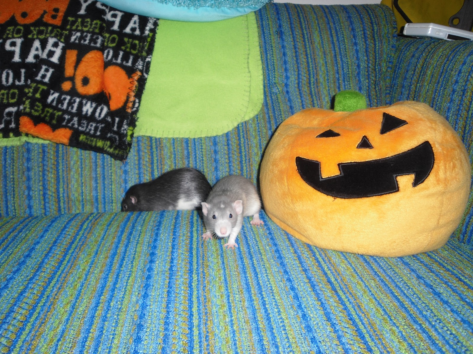 had to share this halloween y picture of romulus and remus and the pillow i got at target and the blanket on the back of the couch was from walmart see
