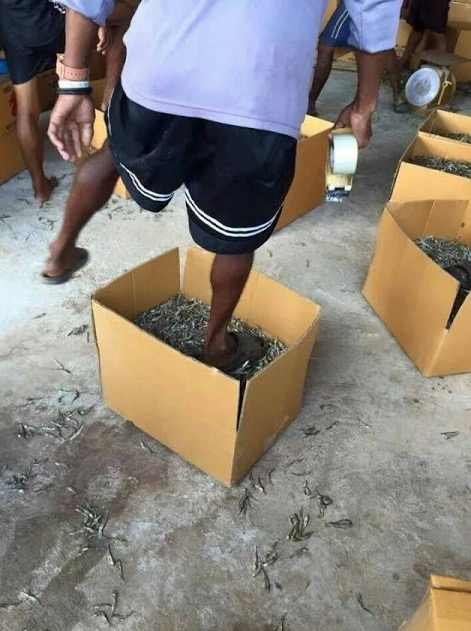 Kisah sebenar sekumpulan warga asing pijak ikan bilis di Pulau Pinang