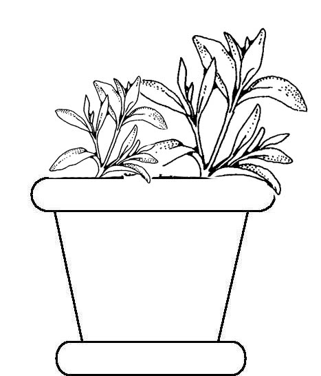Potted Plants Coloring Pages title=