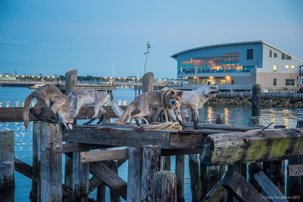 Art Calendar Maine : Corey templeton photography wolves of portland