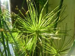 omas hausapotheken tips bew hrte pflanzen zur raumluft entgiftung. Black Bedroom Furniture Sets. Home Design Ideas