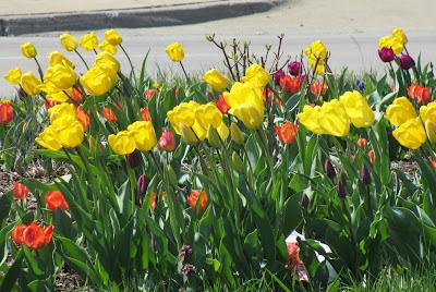 Easter Flowers Detroit