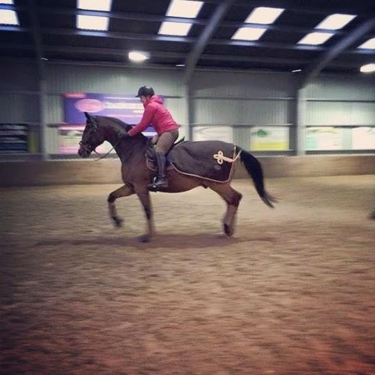 Roosa's Horsey Life: TOA Blog Hop: Worth 1k Words