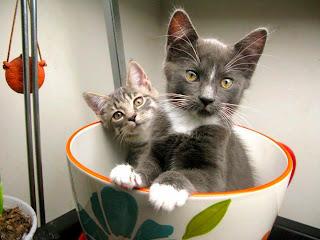 Dos gatito una taza