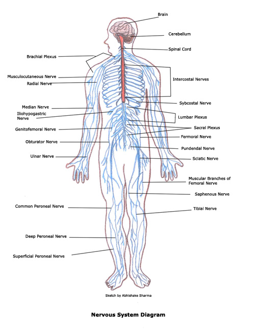 human body essays Find essays and research papers on human body at studymodecom we've helped millions of students since 1999 join the world's largest study community.