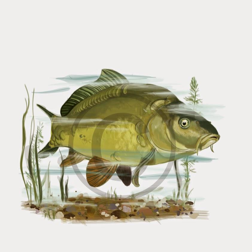 Kresba Ilustrace Grafika Kresby Ryb