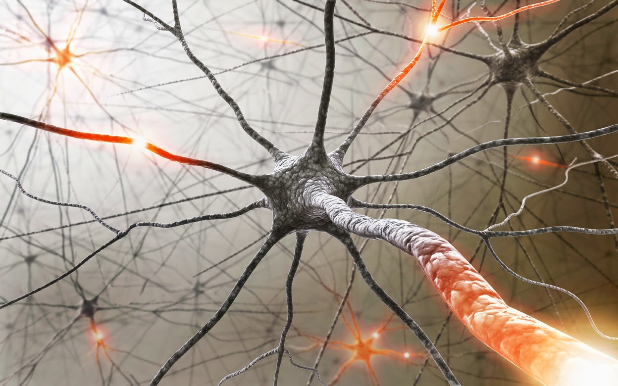 New Drugs To Combat Multiple Sclerosis Discovered