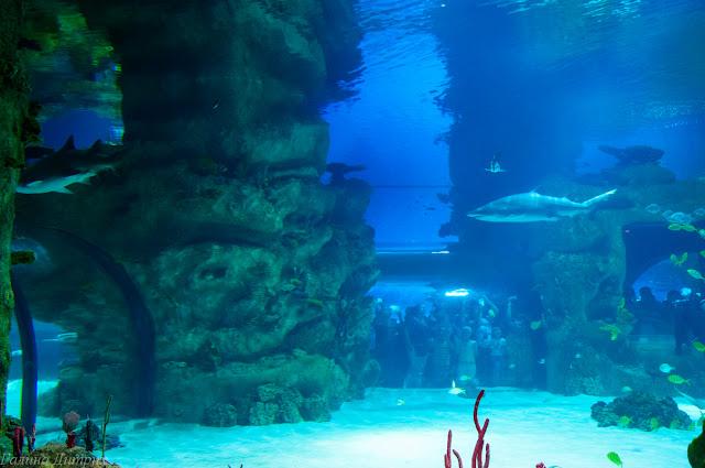Путешествия: Москвариум акулы