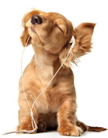 Şarkınız Yoksa Yüreğiniz de Boş
