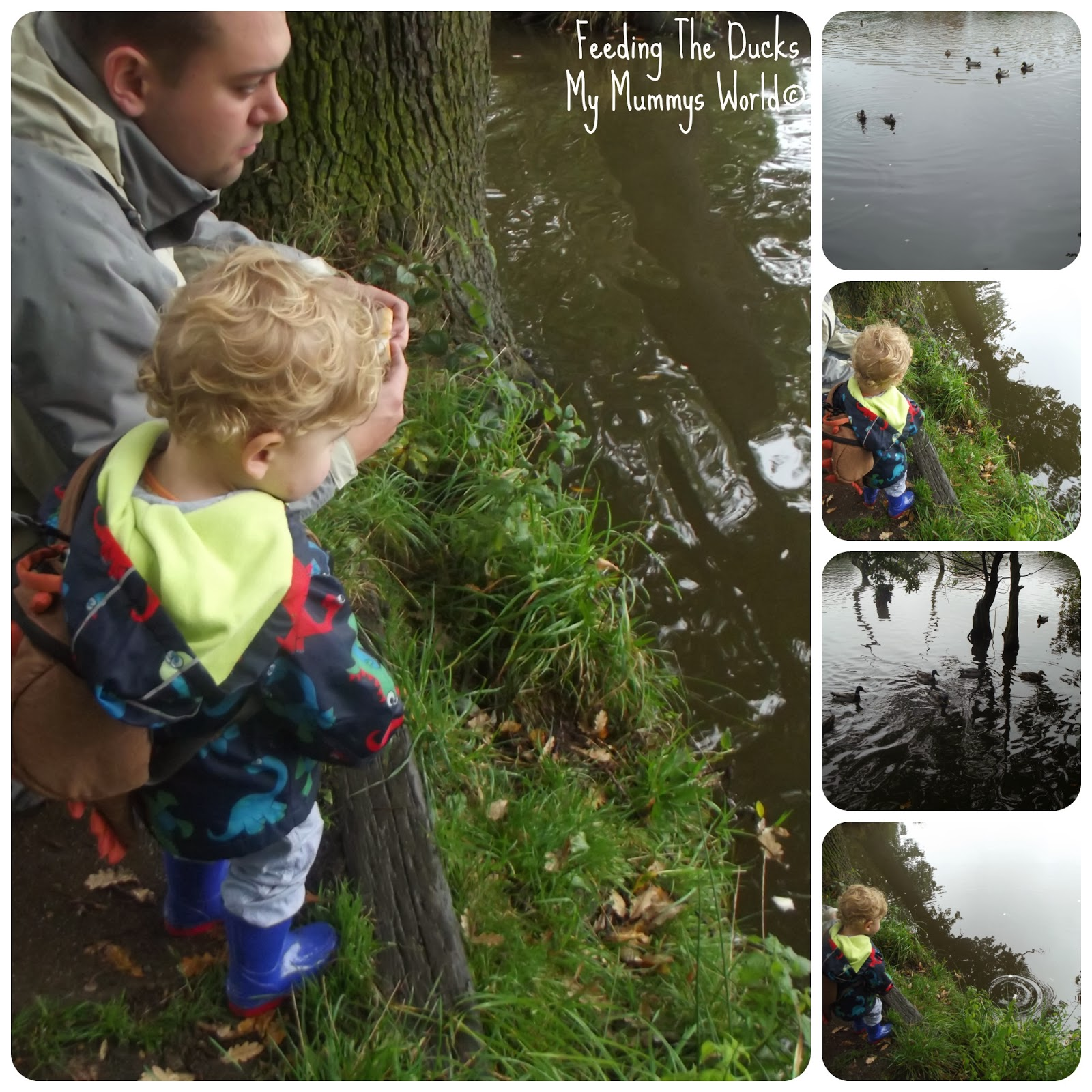 Feeding The Ducks. My Mummys World©