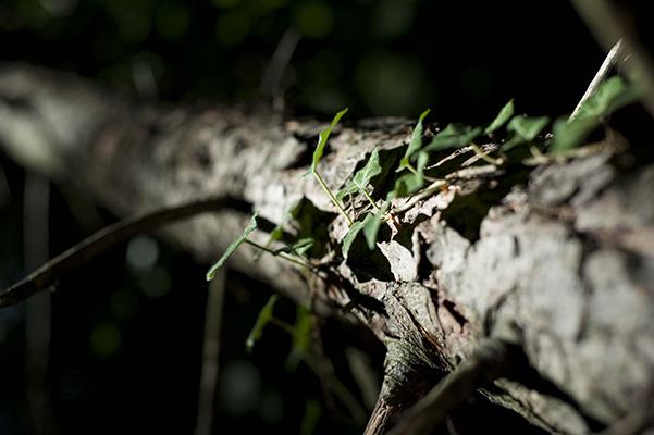 Priorité ouverture, arbre et forêt à Montaud