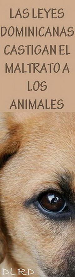 CRUZADA POR LOS ANIMALES