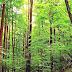 Temperate Deciduous Forest - Latitude Of Temperate Deciduous Forest