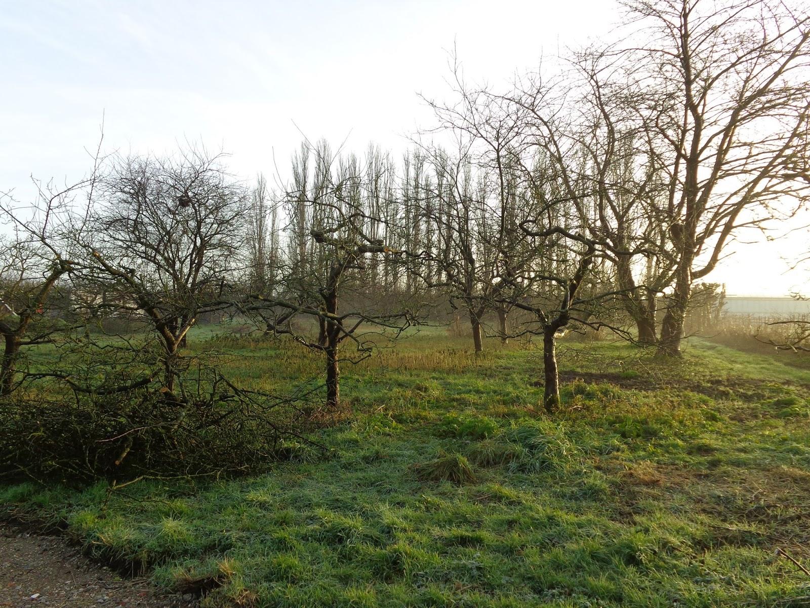 Van alles wat un peu de tout praktijkles fruitbomen - Tailler les arbres fruitiers ...