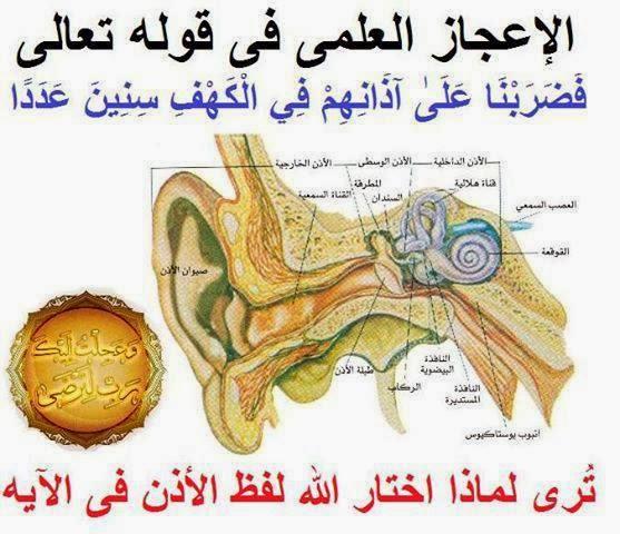الإعجاز العلمي في قوله تعالى..فضربنا على أذانهم فى الكهف سنين عددا..