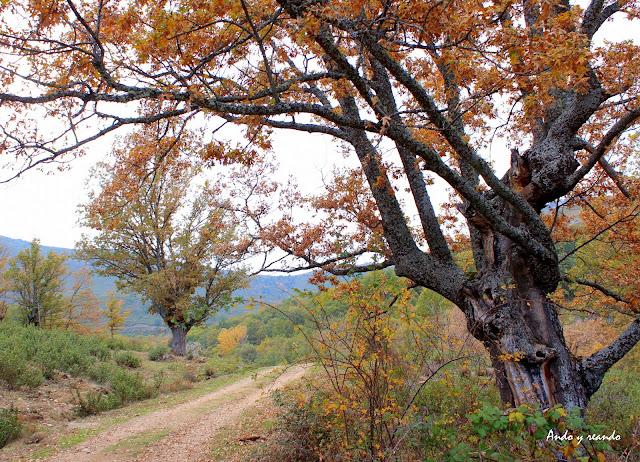 Castaños en la Sierra del Rincón-Madrid