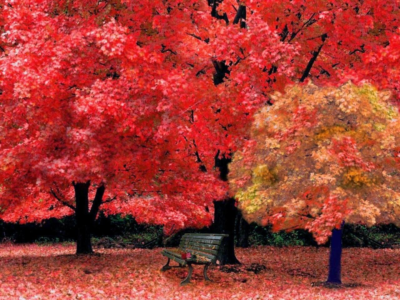 red autumn flower hd 720p photos