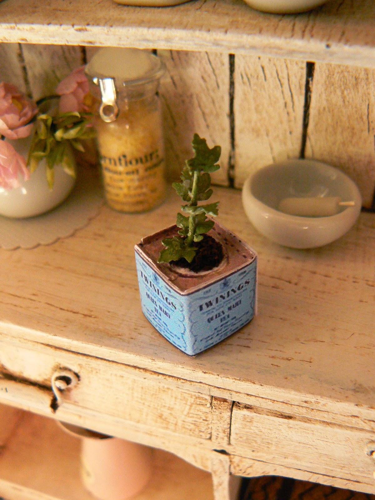Minieden plantas aromaticas - Plantas aromaticas en la cocina ...