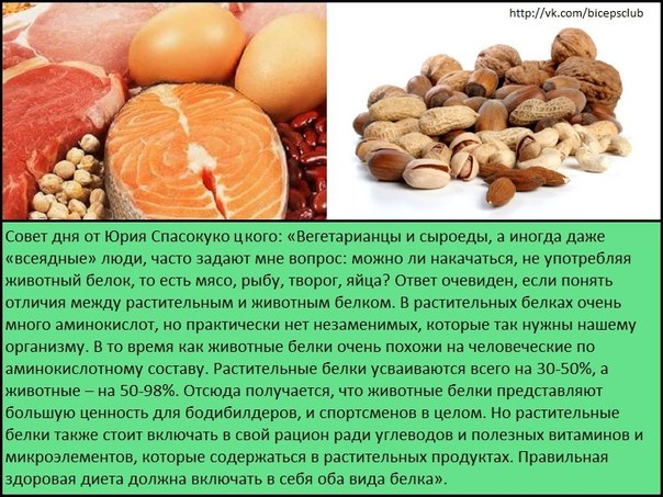Можно ли орехи на белковой диете