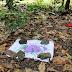 Bebê recém-nascido é achado morto em plantação de cacau em Varzedo