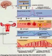 menstruasi haid datang bulan