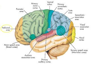Makanan yang baik untuk otak