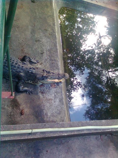 Palawan Crocodile Farm