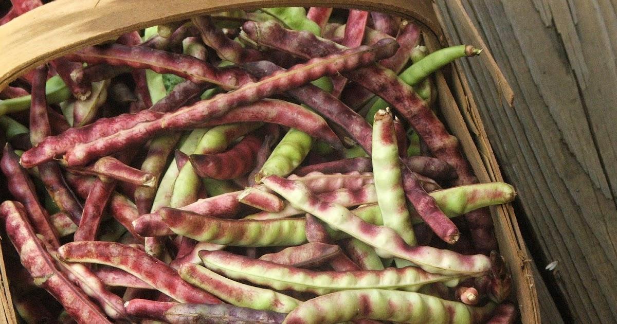 Canning Field Peas